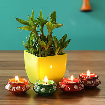 good luck plant for diwali:Lucky Bamboo for Diwali