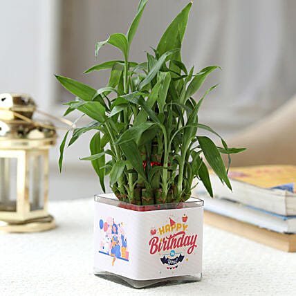 Lucky Bamboo Plant Birthday Greetings