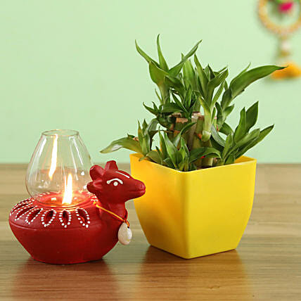 lucky bamboo with lantern online:Send Diyas