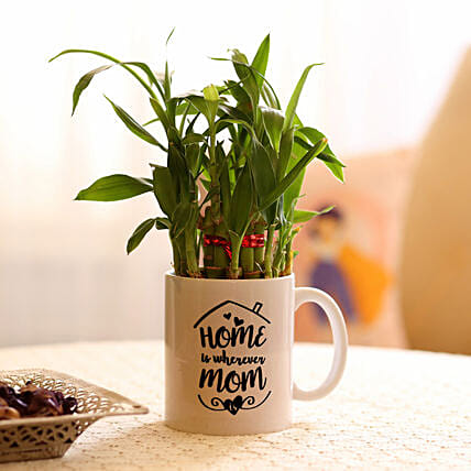 Online Bambo Plant For Mom