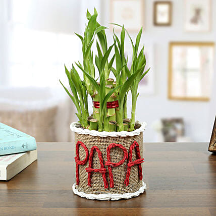 Personalized Lucky Bamboo for Father:Exotic Plants