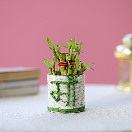 Lucky Bamboo for Mother:Exotic Plant Gifts