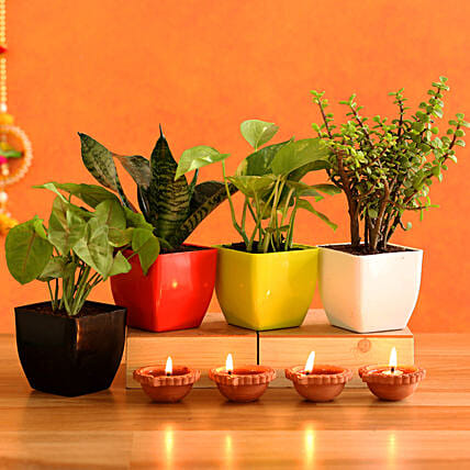 Lush Green Plants & 4  Diyas:Diwali All Gifts