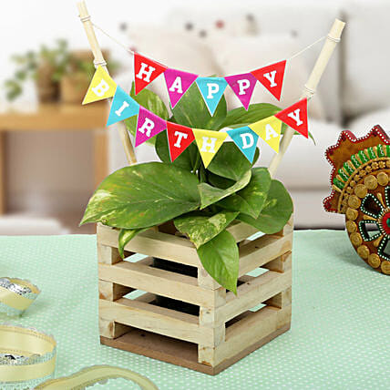 Money plant in a wooden planter pot with a happy birthday banner