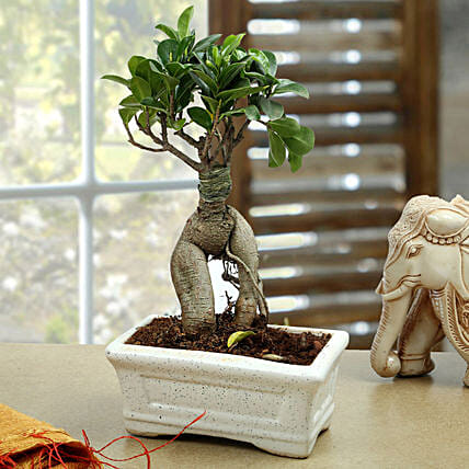 A bonsai plant in a ceramic pot