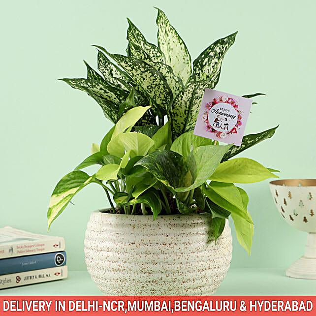 Online Midnight Dream Bouquet For Anniversary