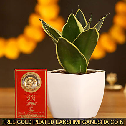 MILT Sansevieria & Free Gold Plated Coin