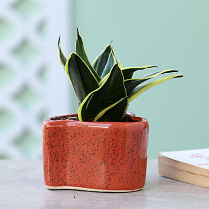 Online Sansevieria In Red Heart Shaped Pot