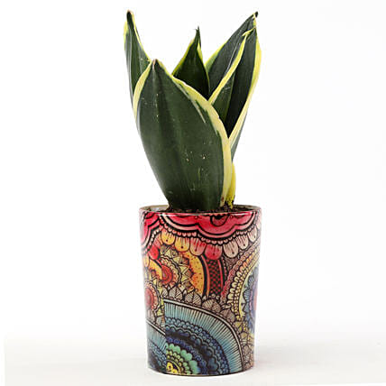 sansevieria plant in decorative printed pot