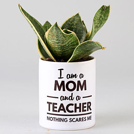 air purifying plant for mothers day