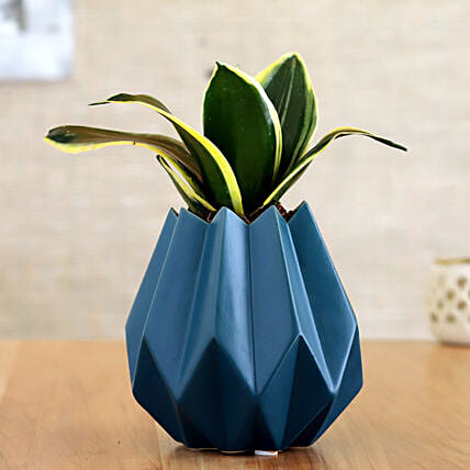 Milt Sansevieria Plant In Green Conical Pot