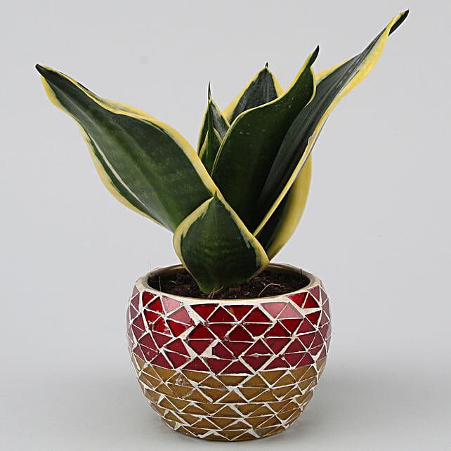 Online MILT Sansevieria Plant In  Mosaic Pattern Metal Pot