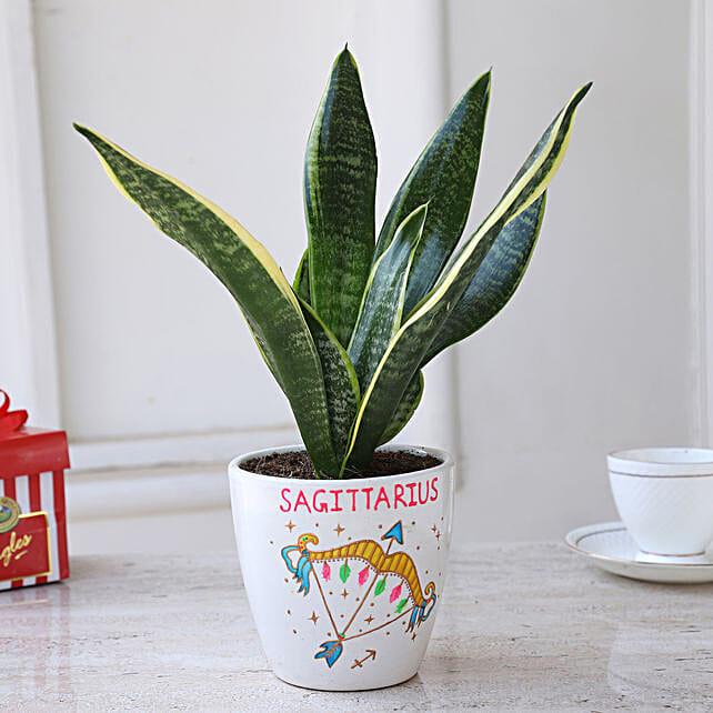 Online Sansevieria Plant In Sagittarius Pot