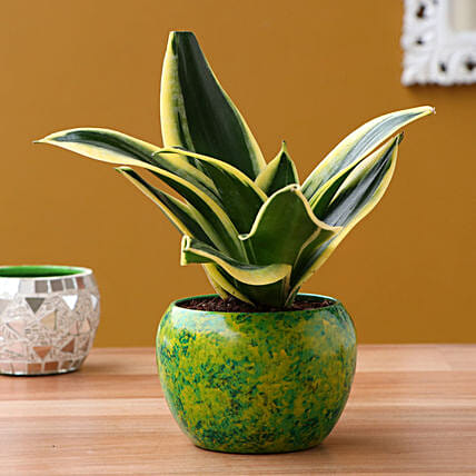 MILT Sansevieria Plant In Yellow Green Abstract Metal Pot