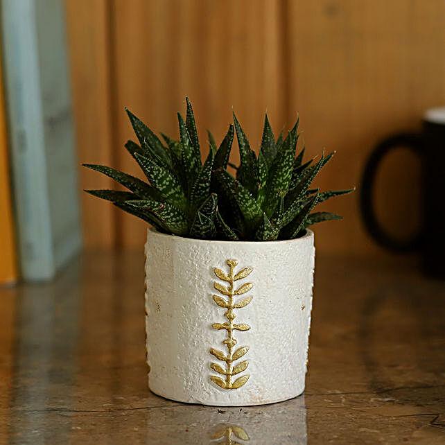 Mini Aloe Vera Plant in Ceramic Pot