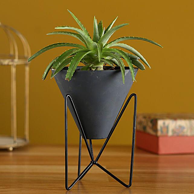 Mini Aloevera Plant In Triangular Pot With Stand