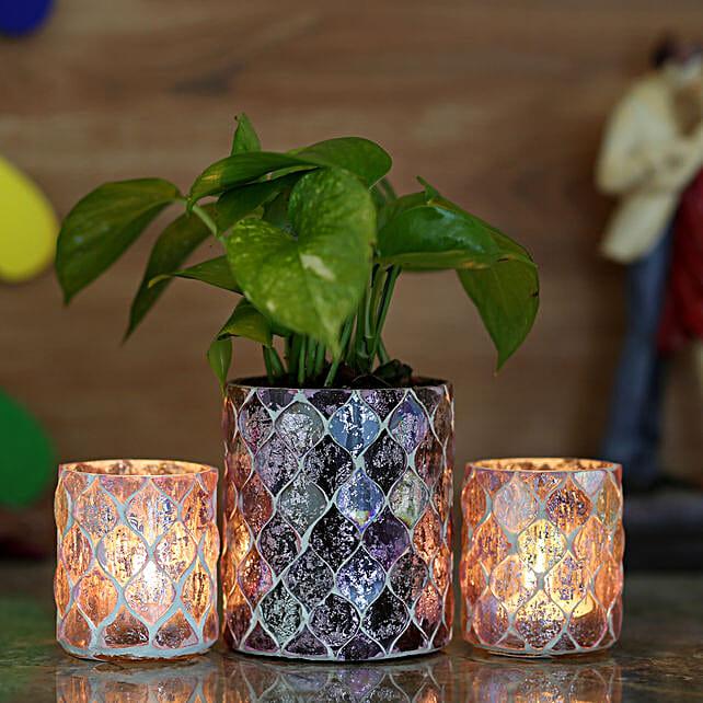money plant with 2 diamond cut planter online