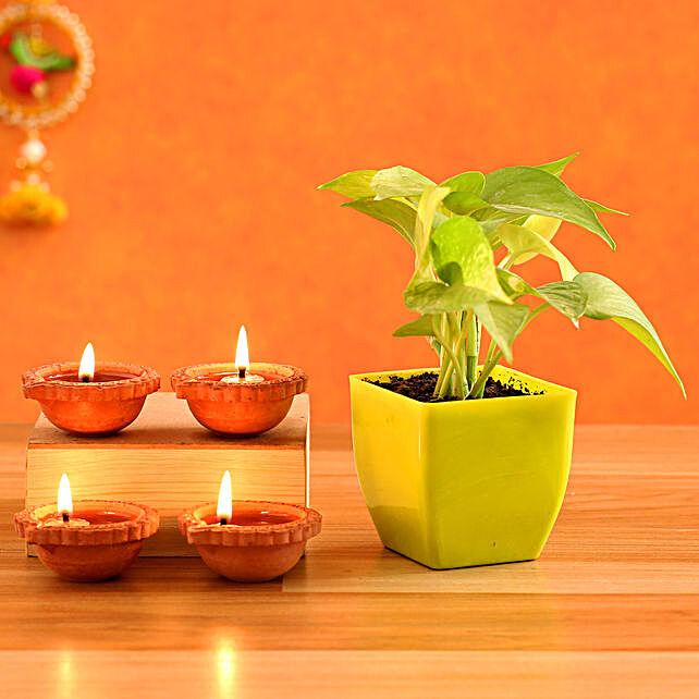 Money Plant & 4  Diyas