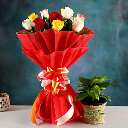 Buy Money Plant And Rose Bouquet:Buy Flowers Combo