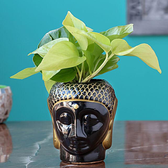 Money Plant in Elegant Planter