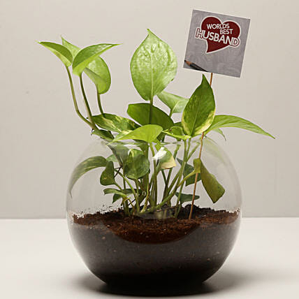lucky plant for karwa chauth