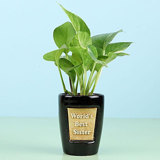 Best Sister Plant Online