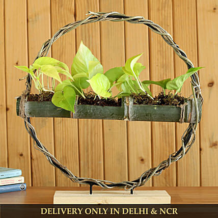 Money Plant In Bamboo Planter And Iron Stand