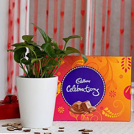 Money Plant N Chocolate Valentine Combo