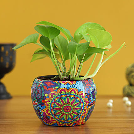 money plant in colourful printed pot:Money Plants