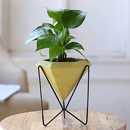 Money Plant In Conical Pot With Stand:Planter Stands