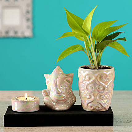 money plant in ganesha tray planter