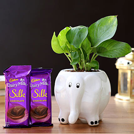 Money Plant in Elephant Pot & Cadbury Chocolates