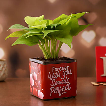 Money Plant in Valentines Glass Vase:Hug Day Gifts