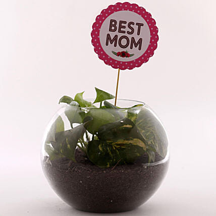 Money Plant For Mothers