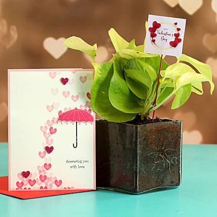 Money Plant In Glass Vase With Greeting Card & V-Day Tag Hand Delivery