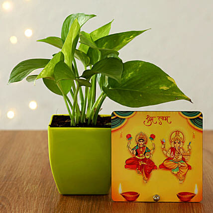 goodluck plant combo for diwali