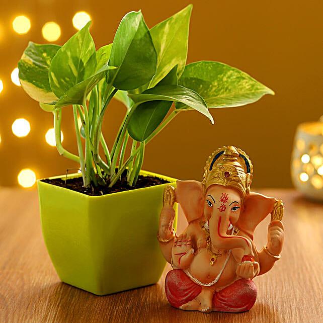 diwali plants combo for friend