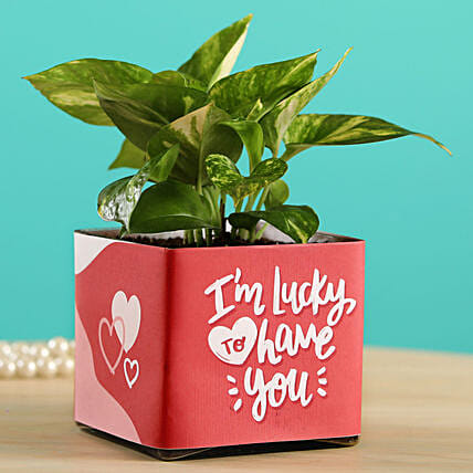 Money Plant In Lucky To Have You Glass Pot:Air Purifying Plants