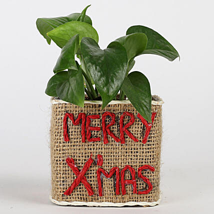 money plant with Christmas text vase
