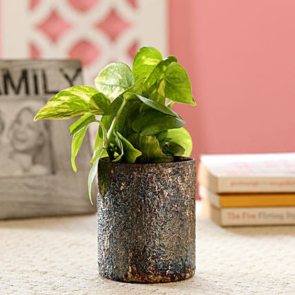 Online Money Plant in Glass Vase