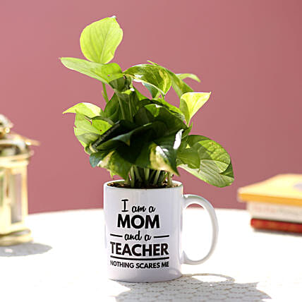 green plant with mug for mothers day:Plants Delivery For Mothers Day