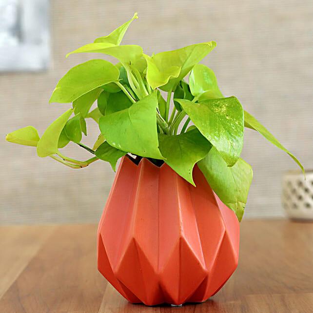 Money Plant In Orange Conical Pot
