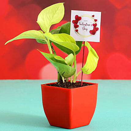 Money Plant In Red Plastic Pot With V Day Tag:Send Plants for Valentines Day
