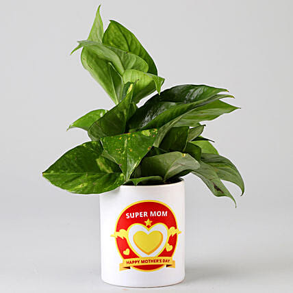 plant in printed pot for mom online