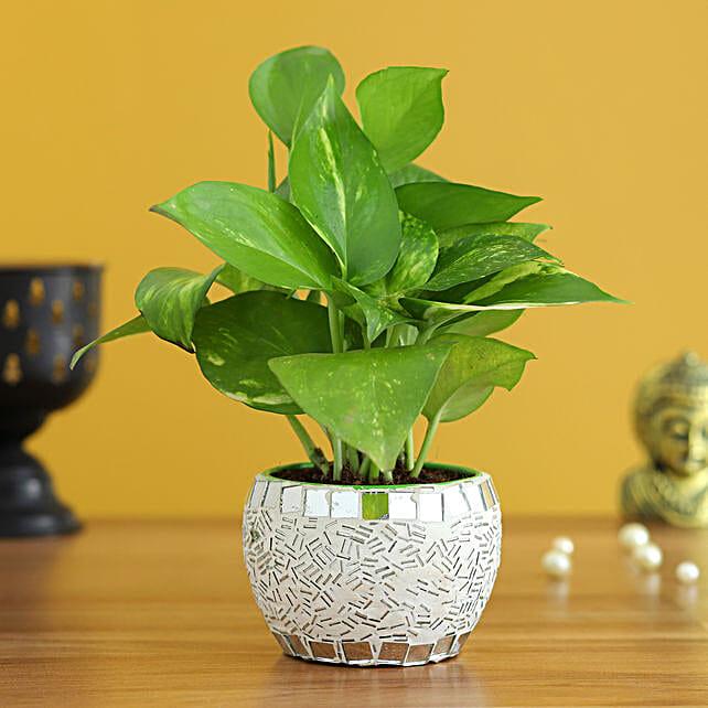 money plant design metal pot online