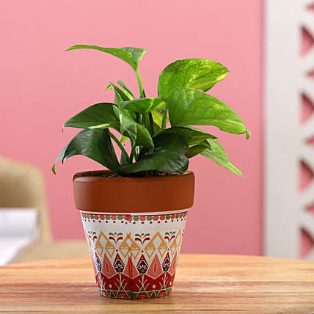 Money Plant In White Pink Ceramic Pot