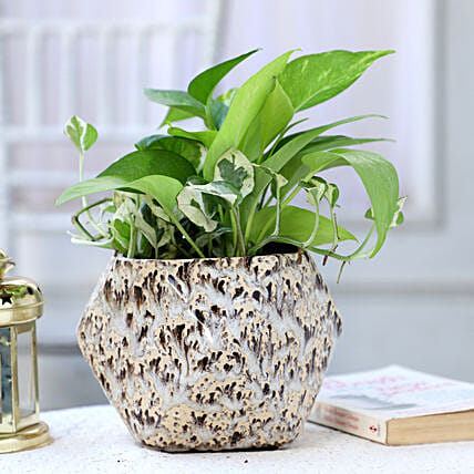 Online Money Plant