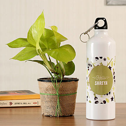 online money plant with bottle