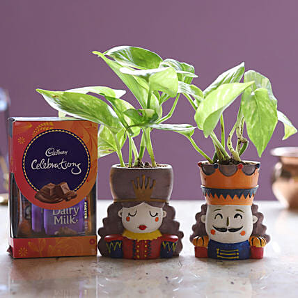 Online Money Plant Set And Cadbury Celebrations