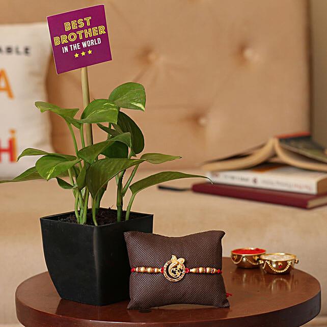 Rakhi with Plant Online